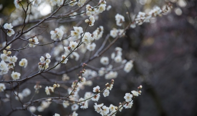 Surprised to see flowers blooming in Winter in The Imperial Palace Gardens